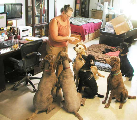 Royal Standard Poodles