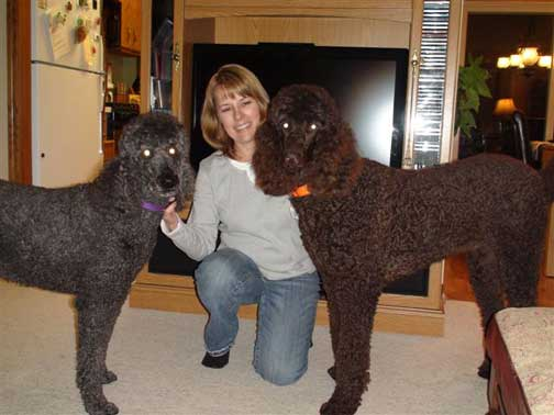 Large Standard Poodle Dundee