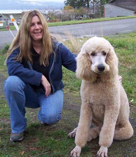 Giant Standard Poodles