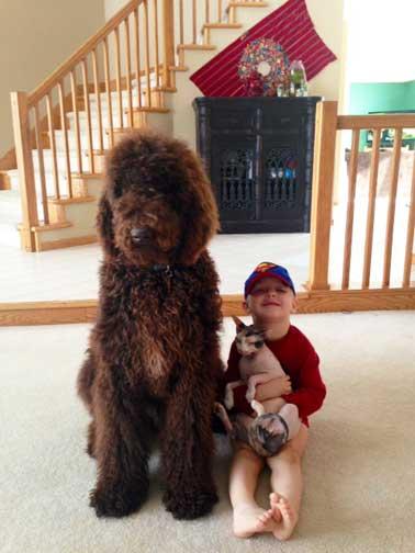 Big giant poodle